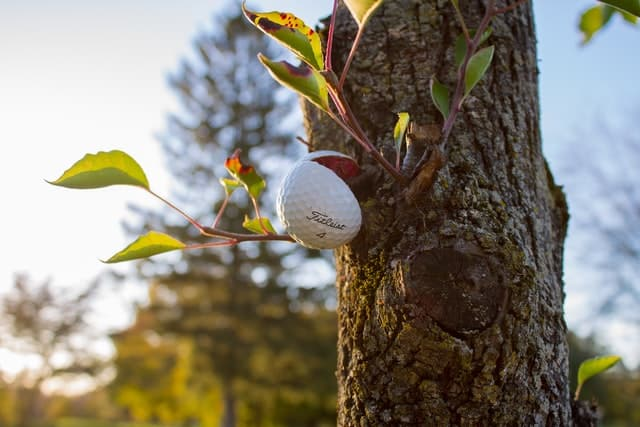 Golf Ball on tree